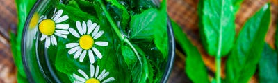 Banner of A cup of mint tea with chamomile on a wooden background.