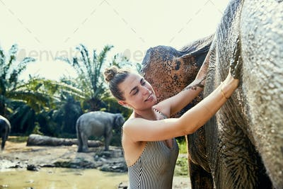 Smiling woman standing in a river washing an Asian elephant
