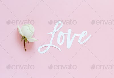 Flowers and pink paper on a light green background