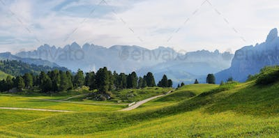 Field with alpine yellow flowers from Sella pass, Dolomites Alps, Italy, Europe
