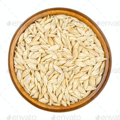 Spelt grains, seeds with outer husk in wooden bowl