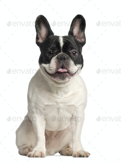 Portrait of French Bulldog, 2 years old, sitting in front of white background