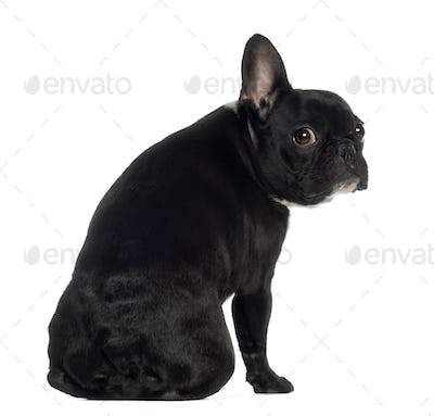 Portrait of French Bulldog, 13 months old, sitting in front of white background