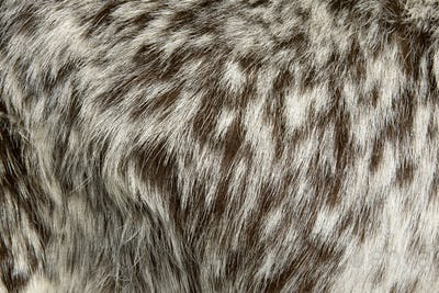 Close-up of Rove goat fur, full frame