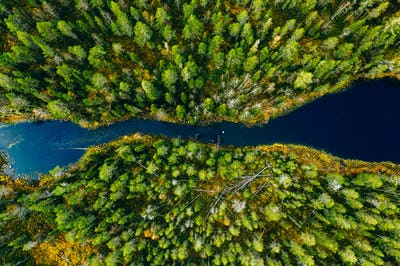 Aerial view of fast river through green pine forest in Finland