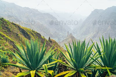 Santo Antao island at Cabo Verde. Volcano terrain with mountain edges above the valley overgrown