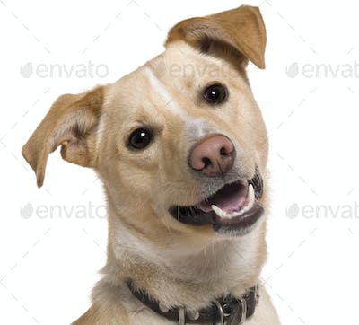 Close-up of Mixed breed dog, 9 months old, in front of white background