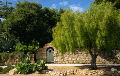 Pepper tree and sandstone wall