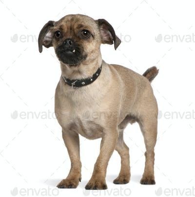 Mixed-breed dog, 1 year old, standing in front of white background