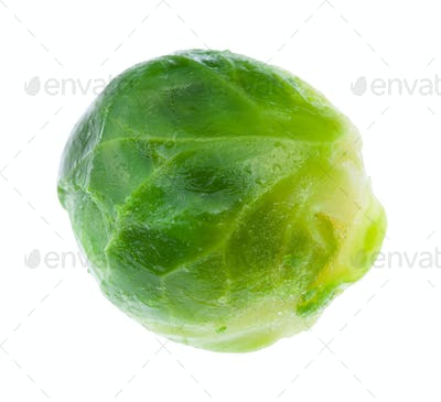 wet green ripe brussels sprout isolated on white