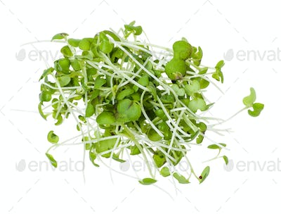 top view of heap from fresh mustard cress isolated