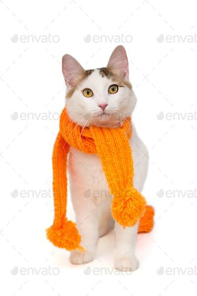 White cat in orange scarf