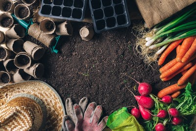 Organic Homegrown Produce and Gardening Equipment with Copy Space
