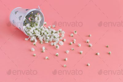Flowers in a white bucket on a light pink background
