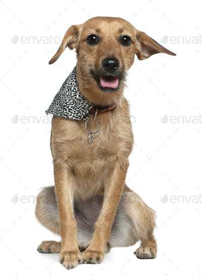 Mixed Griffon wearing handkerchief, 1 year old, sitting in front of white background