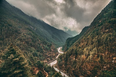 Coniferous forest, river in the canyon. Himalayas