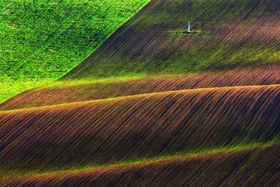 Green and brown waves of the agricultural fields