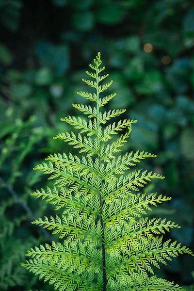 Freshness Green leaf of Fern on black background