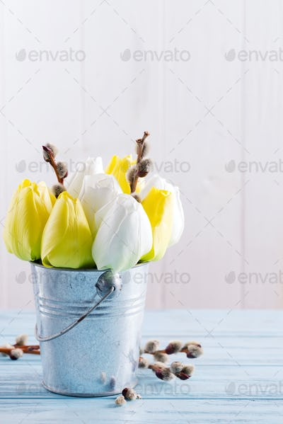Greeting card with fresh spring tulips flowers and fresh willow twigs in a bucket on a light blue