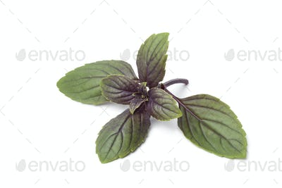 Fresh red basil leaves