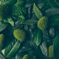 Creative layout made of green leaves. Flat lay. Nature concept