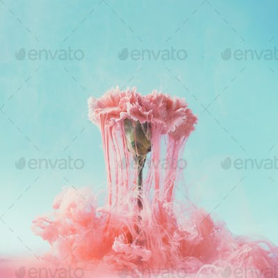 Pink carnation flower with pastel ink. Creative abstract spring nature. Summer bloom concept.