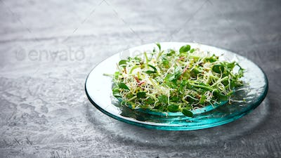 Raw Sprouts Microgreens.Fresh Green  Salad.Concept of Healthy Food.