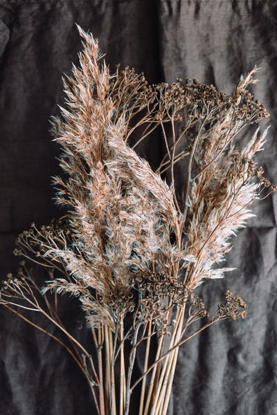 Macro view of dried grass for creating interior design decoration.