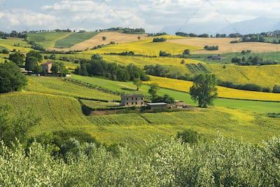 Rural landscape near Mogliano, Marches, Italy