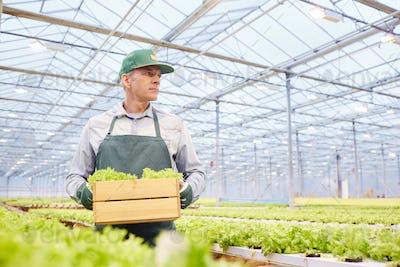 Worker Holding Box at Vegetable Plantation