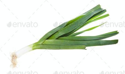 fresh green leek vegetabe isolated on white