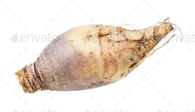 fresh rutabaga vegetable isolated on white
