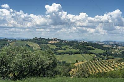 Rural landscape near Monterubbiano, Marches, Italy
