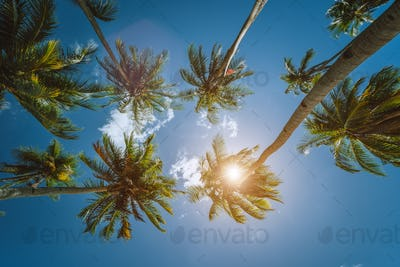 Coconut palm trees tops with sun shining through leaves, view from below. Getaway summer travel