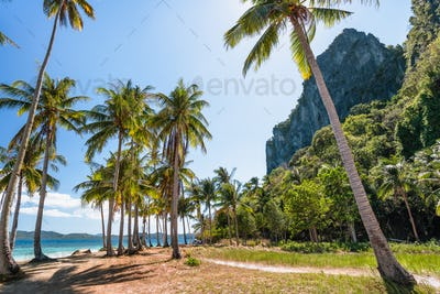 El Nido, Palawan, Philippines. Palm trees on tropical beach with rock cliffs in background. Island