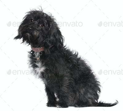 Mixed-breed dog, 10 months old, sitting in front of white background