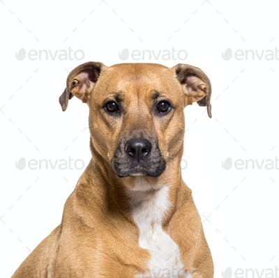 Close-up of a Mixed-breed dog, cut out