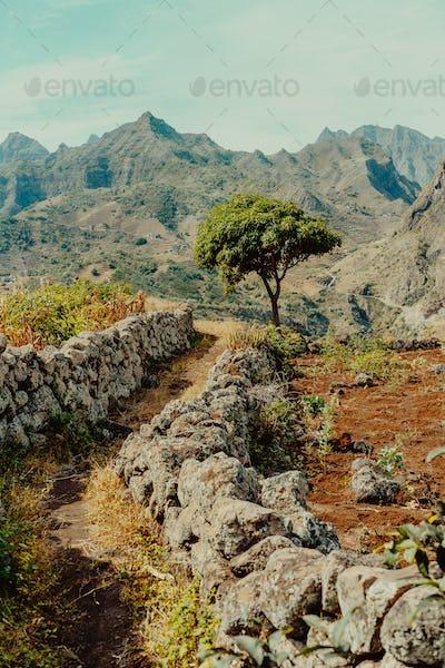Santo Antao, Cape Verde. Plateau with Mango tree and mountain ridge view near Coculi in Ribeira