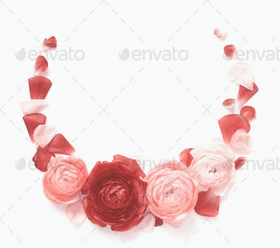 Circle frame made of pink ranunculus flowers on a white background