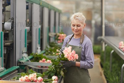 Woman caring about roses