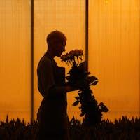 Gardener with roses