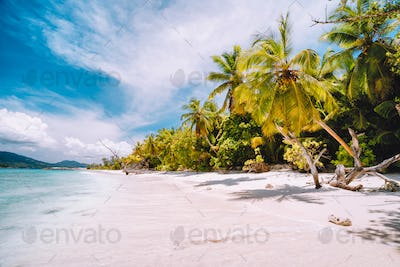 Vacation holiday background exotic wallpaper. Sunny day on paradise beach. White sand, palm trees