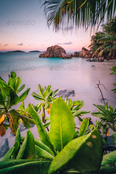 La Digue Island, Seychelles. Beautiful tropical sandy beach with exotic plants in evening sunset