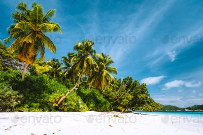 Vacation holiday background wallpaper. Palm trees on tropical secluded sandy beach. Blue sky with