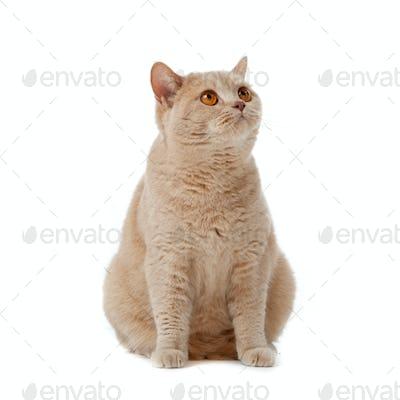 Britcat3 09