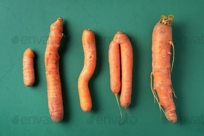 Ugly misshapen carrots on green background. Concept of zero waste production. Top view. Copy space