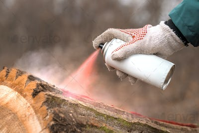 Forestry technician marking tree trunk with red aerosol can paint