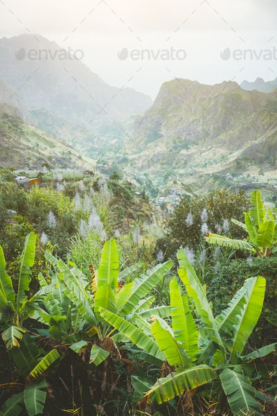 Landscape of banana and sugar cane plantation in front of the green mountains of the Paul Valley, on