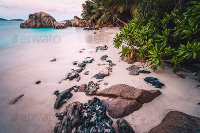 La Digue Island, Seychelles. Beautiful exotic tropical sandy beach with exotic plants in evening