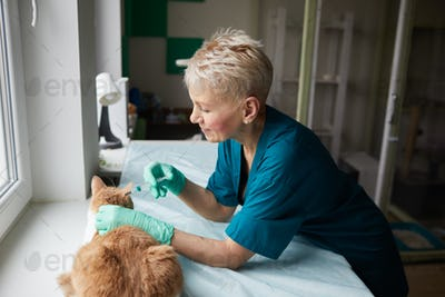 Vaccination against rabies for cat